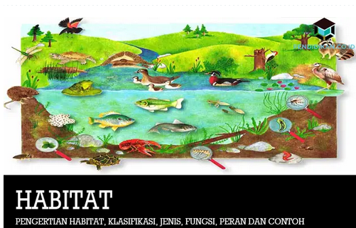 Pengertian Habitat dan Klasifikasi Serta Fungsinya